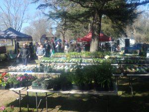 Plant stall at Ballarat Farmers Market